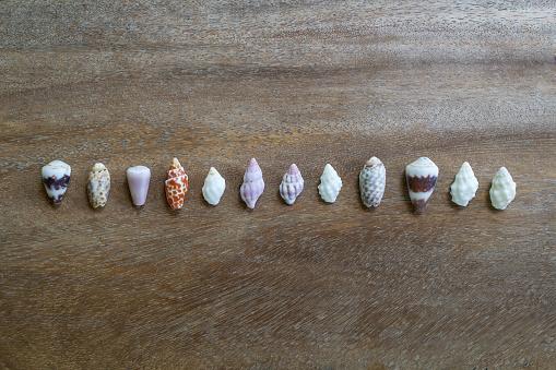 貝殻「Seashells on wooden table」:スマホ壁紙(13)