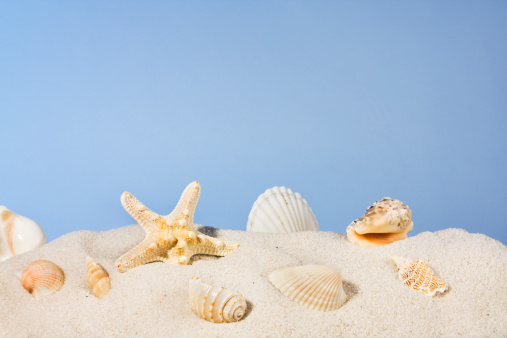 Large Group Of Animals「Seashells on Beach Sand, Starfish and Shells Under Summer Sky」:スマホ壁紙(5)