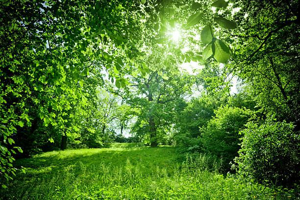 Sunny Nature:スマホ壁紙(壁紙.com)