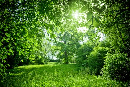 息抜き「明るい自然の」:スマホ壁紙(4)