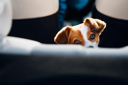 カメラ目線「Watching dog」:スマホ壁紙(8)