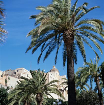 Frond「Italy, Sardinia, Cagliari, palm tree by town」:スマホ壁紙(2)