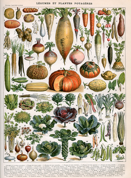 Turnip「Varieties Of Vegetables」:写真・画像(7)[壁紙.com]