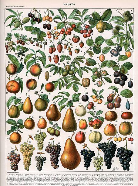 Varieties Of Fruit:ニュース(壁紙.com)