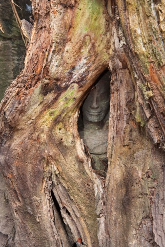 Overtaking「Temple carving behind tree roots at Ta Phrom, Cambodia」:スマホ壁紙(13)