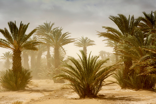 Morocco「Scenery with date palm trees」:スマホ壁紙(9)