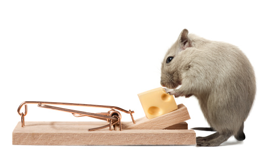 Animal Whisker「Mouse eating cheese of the trap」:スマホ壁紙(13)