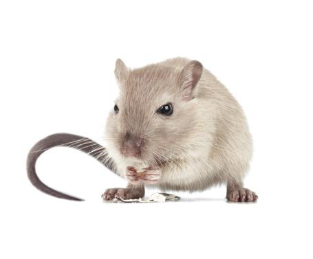 Animal Eye「Mouse eating」:スマホ壁紙(5)