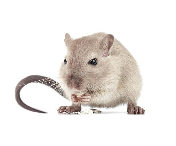 Mouse eating:スマホ壁紙(壁紙.com)