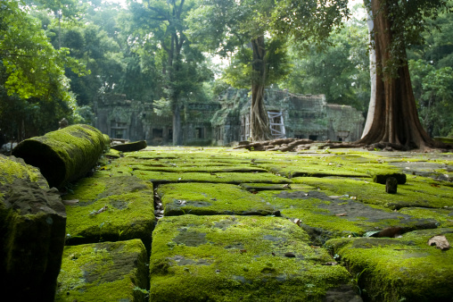 Temple - Building「Old Temple Ruins In The Jungle Near Angkor Wat, Cambodia」:スマホ壁紙(6)