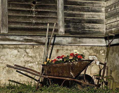 花畑「Country wheelbarrow」:スマホ壁紙(7)