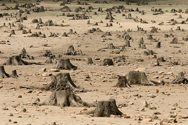 Sad image showing the increase in deforestation:スマホ壁紙(壁紙.com)