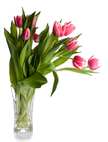 Vase「Pink tulips in glass vase on white」:スマホ壁紙(15)