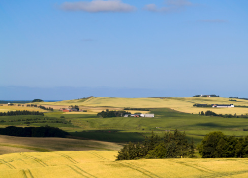 Denmark「Fields in northern Jutland, Denmark」:スマホ壁紙(16)
