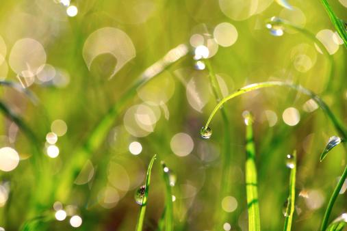 Wet「Fresh wet grass after rain」:スマホ壁紙(17)
