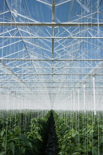 Specimen Holder「Plants growing in greenhouse」:スマホ壁紙(8)