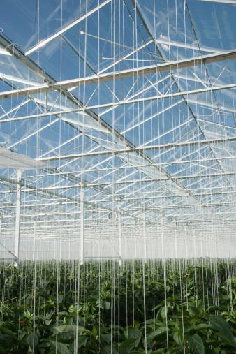 Specimen Holder「Plants growing in greenhouse」:スマホ壁紙(4)