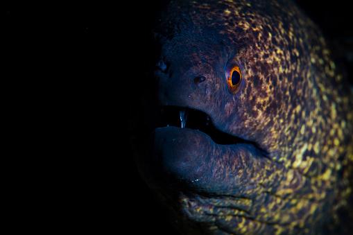 Iris - Eye「A yellow-margined moray eel.」:スマホ壁紙(15)