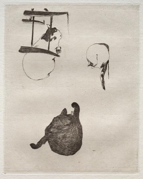 Etching「The Cats」:写真・画像(18)[壁紙.com]