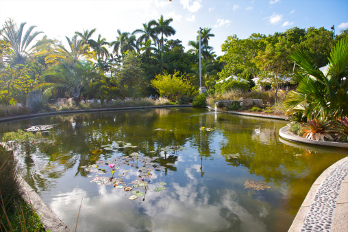 Miami Beach「Lake with lily pods surrounded by palms」:スマホ壁紙(6)
