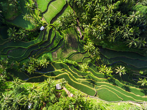 Balinese Culture「Tegallalang Rice terraces」:スマホ壁紙(13)