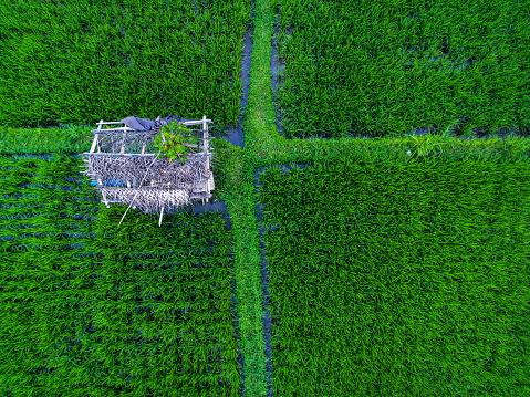 Ubud District「Tegallalang Rice terraces」:スマホ壁紙(19)