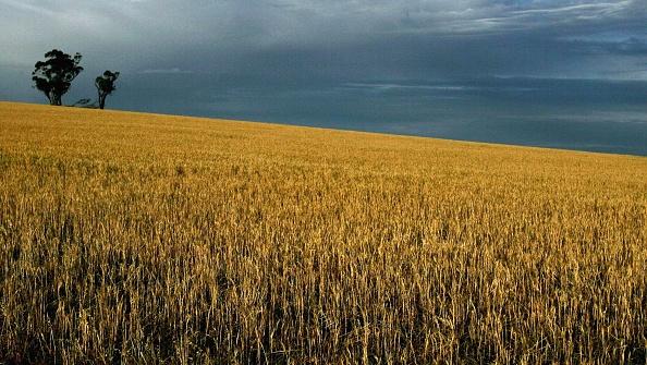 Crop - Plant「Australia Endures The Worst Drought On Record」:写真・画像(13)[壁紙.com]