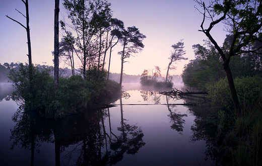 North Brabant「Misty dawn at lake in the middle of a forest」:スマホ壁紙(7)
