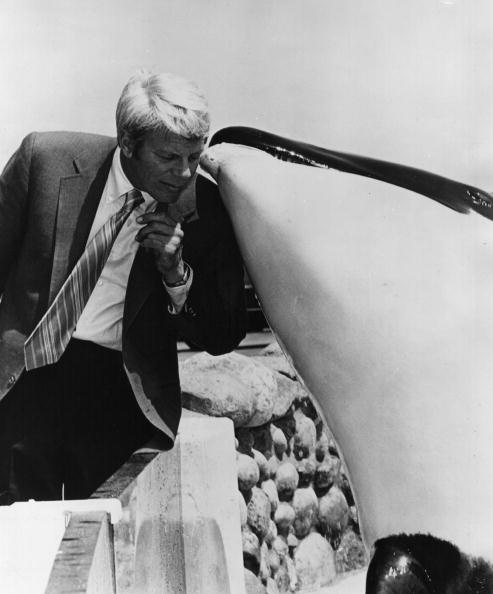Killer Whale「Peter Graves」:写真・画像(3)[壁紙.com]
