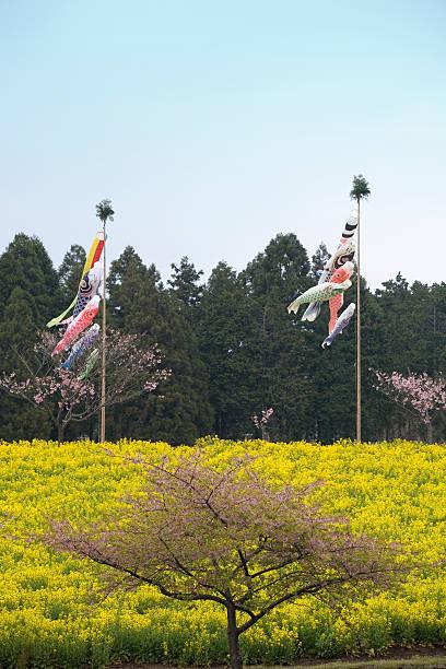 Carp streamer, rape blossoms, and cherry blossoms, Asagiri kogen, Shizuoka Prefecture, Japan:スマホ壁紙(壁紙.com)