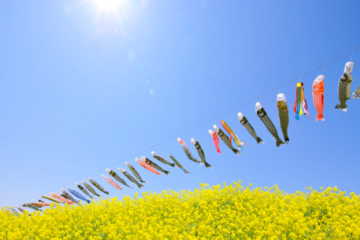 こいのぼり「Carp Streamers Over Rapeseed Oil」:スマホ壁紙(13)