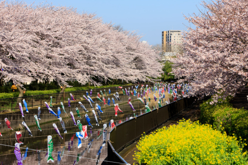 こどもの日「Carp Streamers Decorating River」:スマホ壁紙(6)