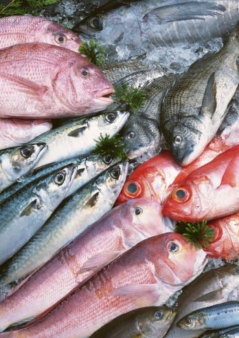 熱帯魚「Fishery Products」:スマホ壁紙(19)