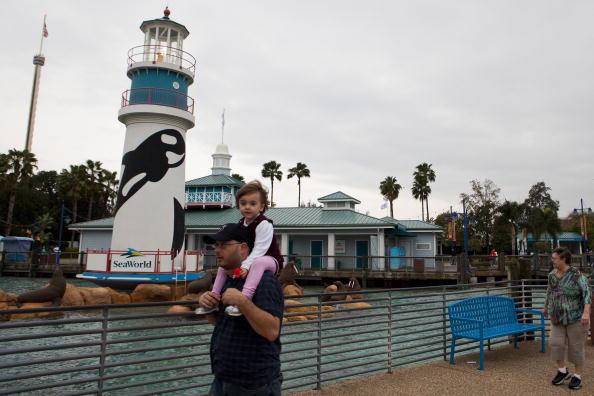 Killer Whale「Killer Whale Kills Trainer Before Show At SeaWorld」:写真・画像(17)[壁紙.com]