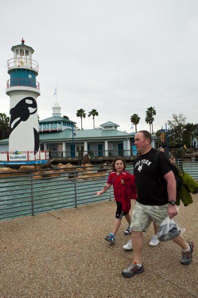 Killer Whale「Killer Whale Kills Trainer Before Show At SeaWorld」:写真・画像(14)[壁紙.com]
