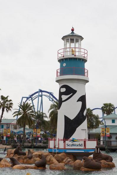 Killer Whale「Killer Whale Kills Trainer Before Show At SeaWorld」:写真・画像(15)[壁紙.com]