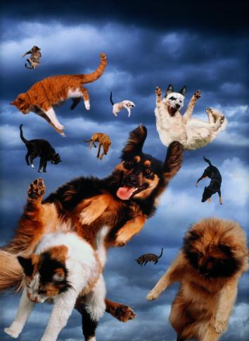 Digital Composite「'Raining cats and dogs'     (Digital Composite)」:スマホ壁紙(15)