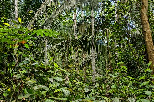 Amazon Rainforest「Peruvian Amazon jungle」:スマホ壁紙(18)