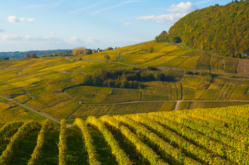 Patchwork Landscape「vineyards Château Chalon Jura France」:スマホ壁紙(18)
