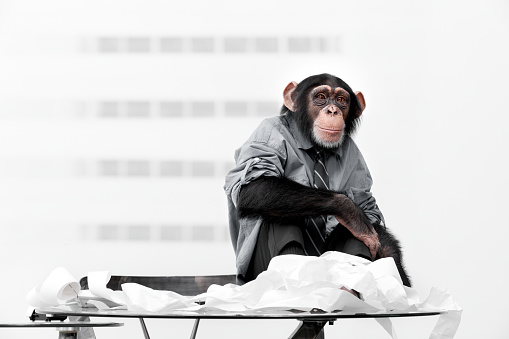 Nerd「Male chimpanzee in business clothes」:スマホ壁紙(7)