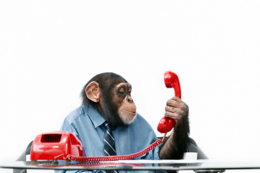 キャラクター「雄チンパンジービジネスの服装」:スマホ壁紙(15)