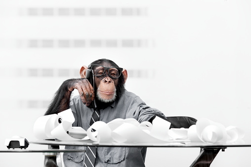 Businessman「Male chimpanzee in business clothes」:スマホ壁紙(9)