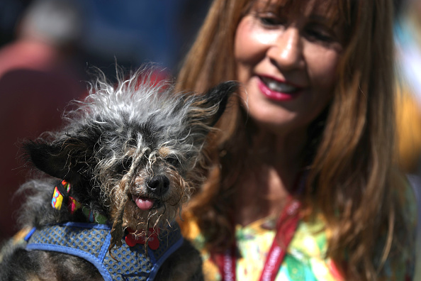Homeless Person「Annual Ugliest Dog Competition Held In Petaluma, California」:写真・画像(19)[壁紙.com]