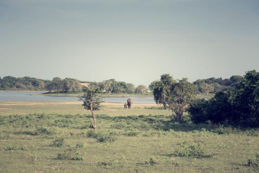 Sri Lanka「Sri Lanka, Southern Province, Yala National Park, cow elephant and calf」:スマホ壁紙(18)