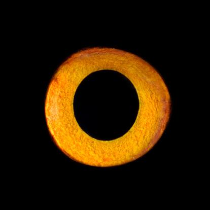 Iris - Eye「Eagel Owl Eye, close-up」:スマホ壁紙(16)