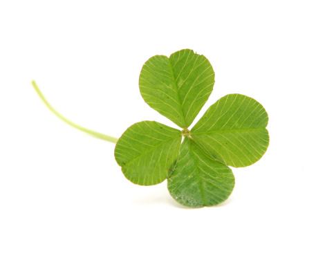 Clover Leaf Shape「Four Leafed Clover Isolated on White」:スマホ壁紙(11)