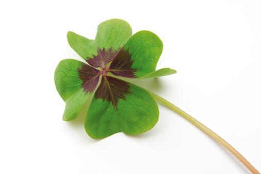 四葉のクローバー「Four leafed clover, close-up」:スマホ壁紙(17)