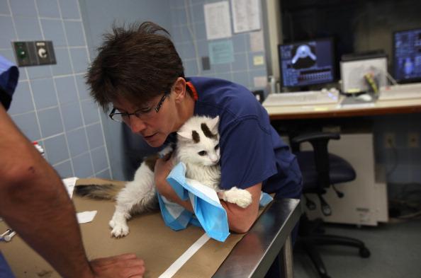 MRI Scanner「New York's Animal Medical Center Provides Advanced Treatments For Pets」:写真・画像(7)[壁紙.com]