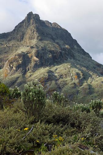 花「Everlasting flowers and steep peaks seen from Hunwicks Camp, Kilembe Route, Rwenzori National Park, Kasese District, Uganda」:スマホ壁紙(3)