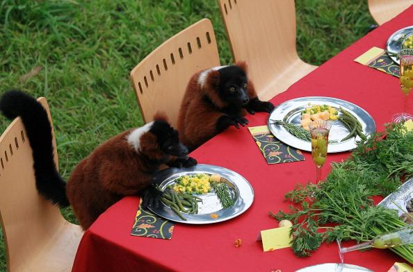 Salad「Lemurs Enjoy Thanksgiving Feast At San Francisco Zoo」:写真・画像(15)[壁紙.com]